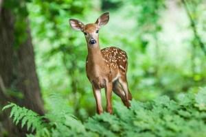 森にたたずむ鹿
