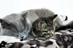 Za co kocham moje koty?