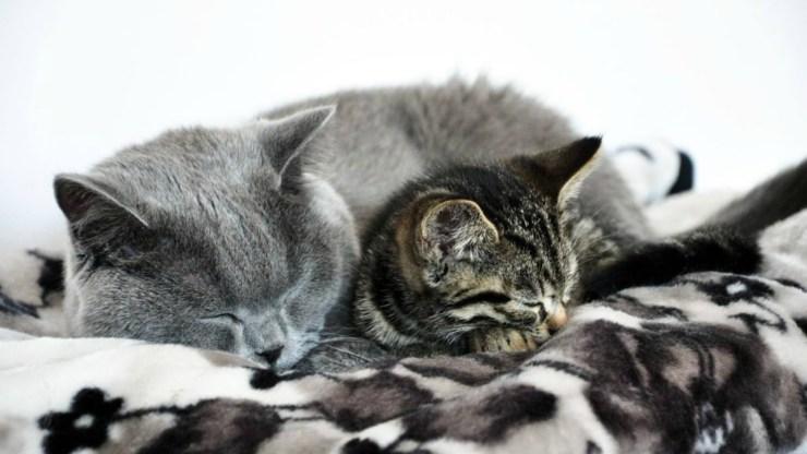 Spooky i Creepy - Drapak dla kota