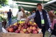 Manzana de Xichú