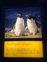 Penguins - 6