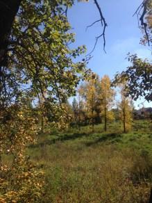 autumn-10