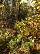 autumn-19