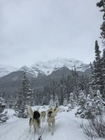 dogsledding - 2