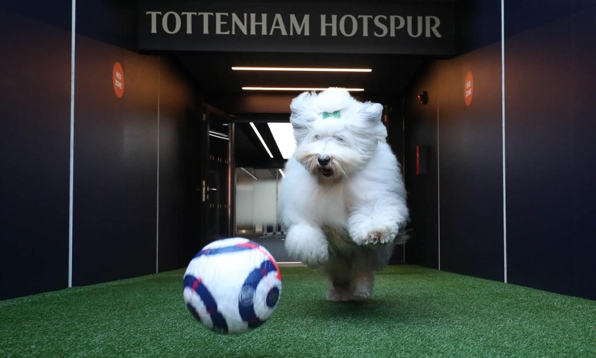 Dulux becomes Official Paint Supplier to Tottenham Hotspur | Tottenham  Hotspur