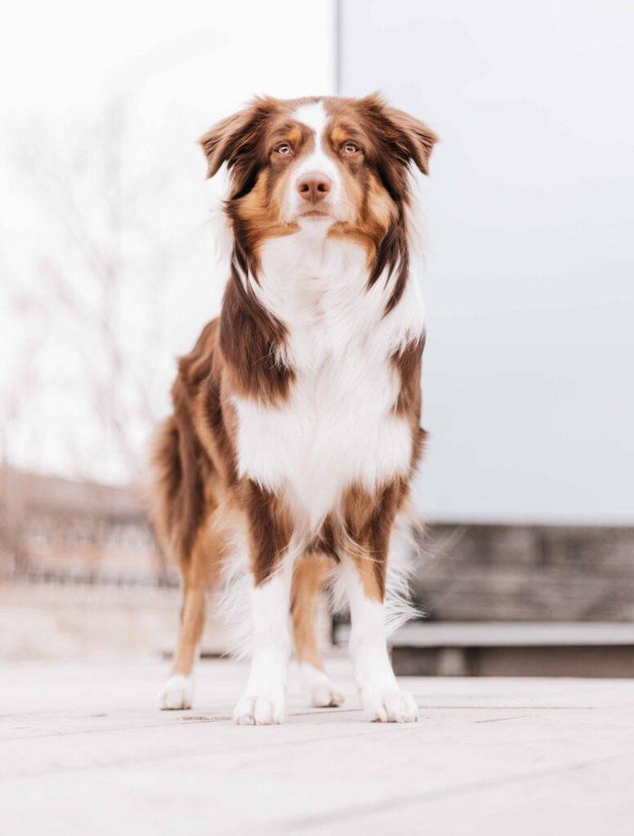 Grimmwelt Kassel mit Hund