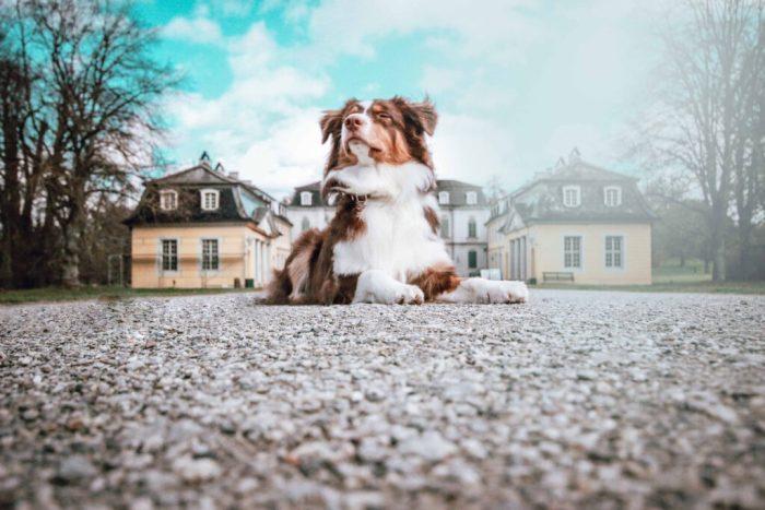 Schloss Wilhelmsthal mit Hund