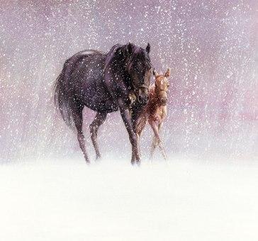 January Foal