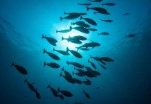 Greenpeace seafood sustainability rank'n'spank