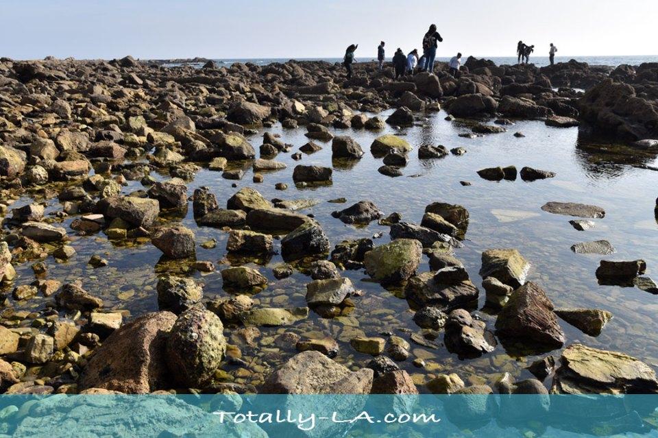 tide pools