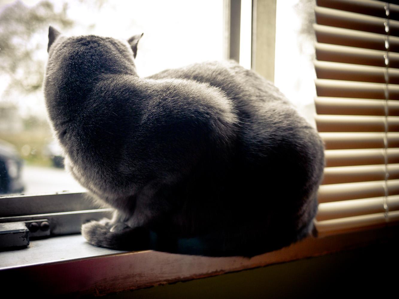 Kitteh in da Window