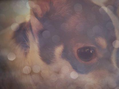 All Seeing Doggie Eye