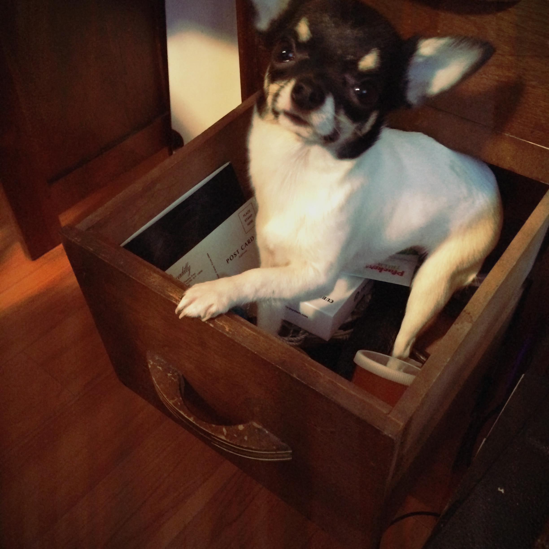 Dog Drawer…