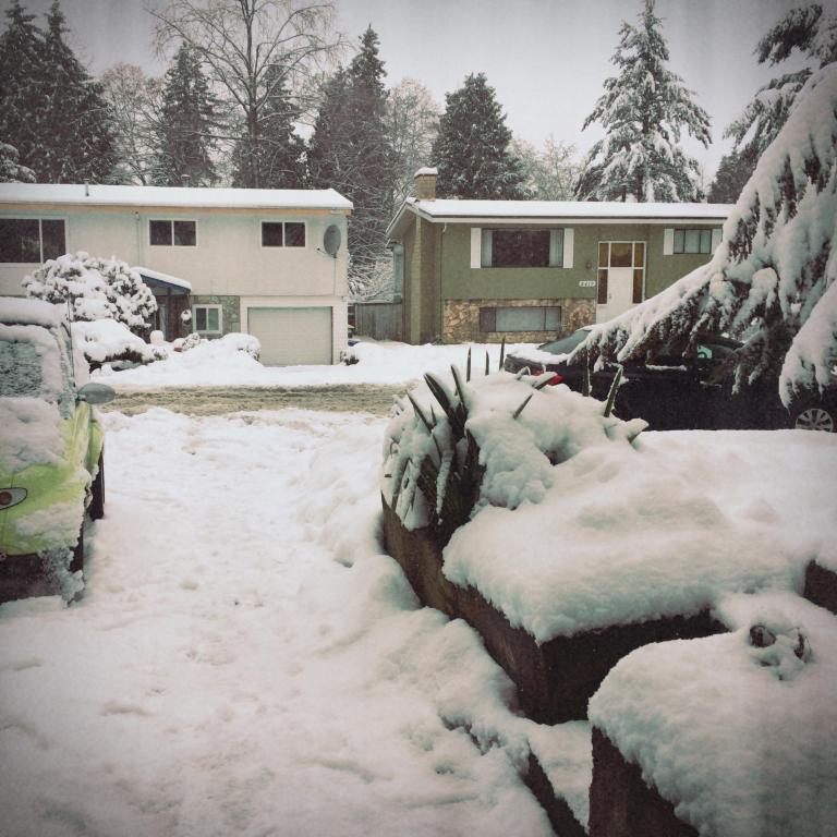 Snow? Snow Snow Snow