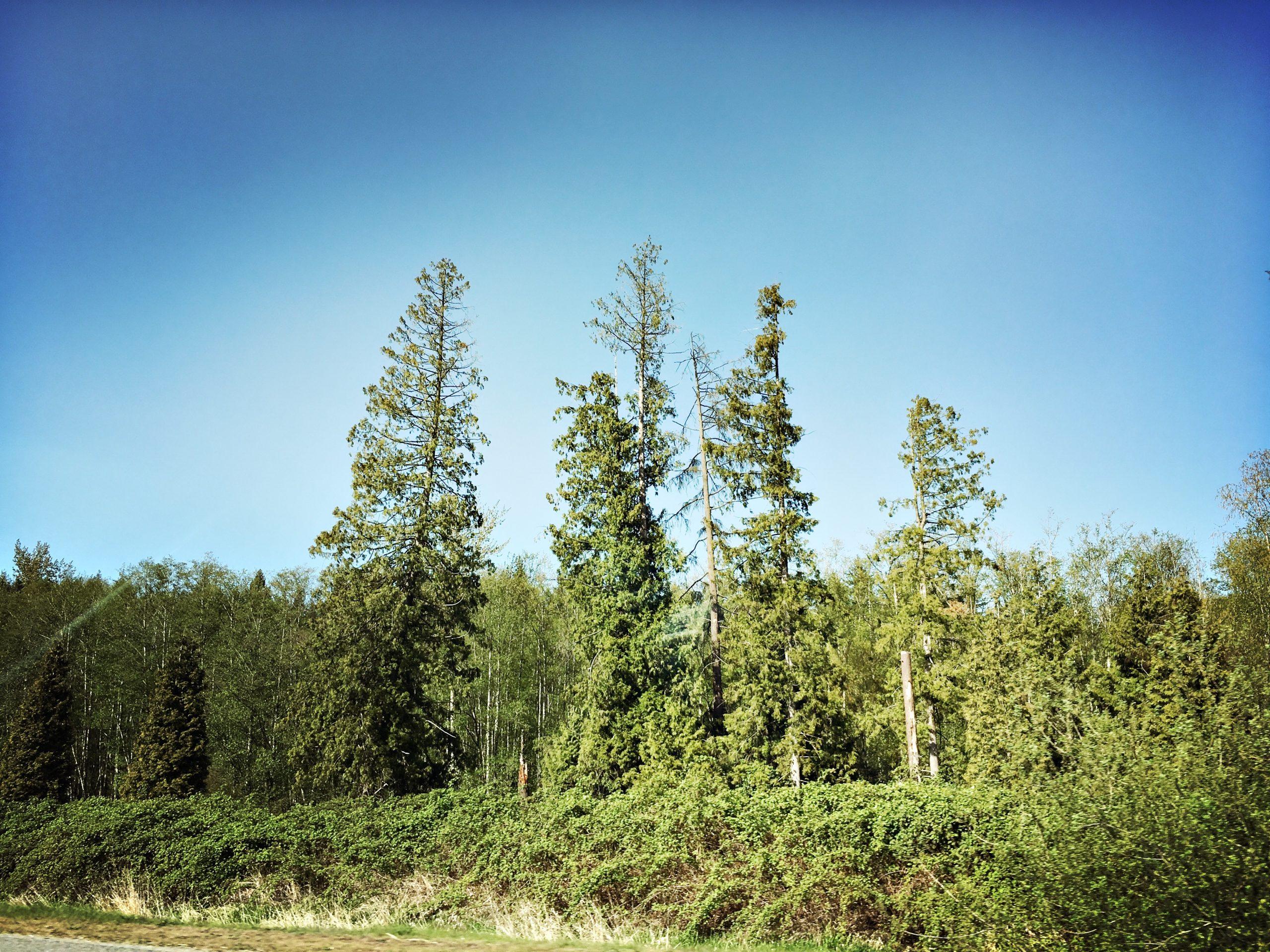 4 Happy Trees