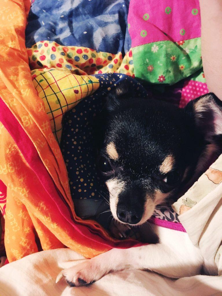 Warm Puppy