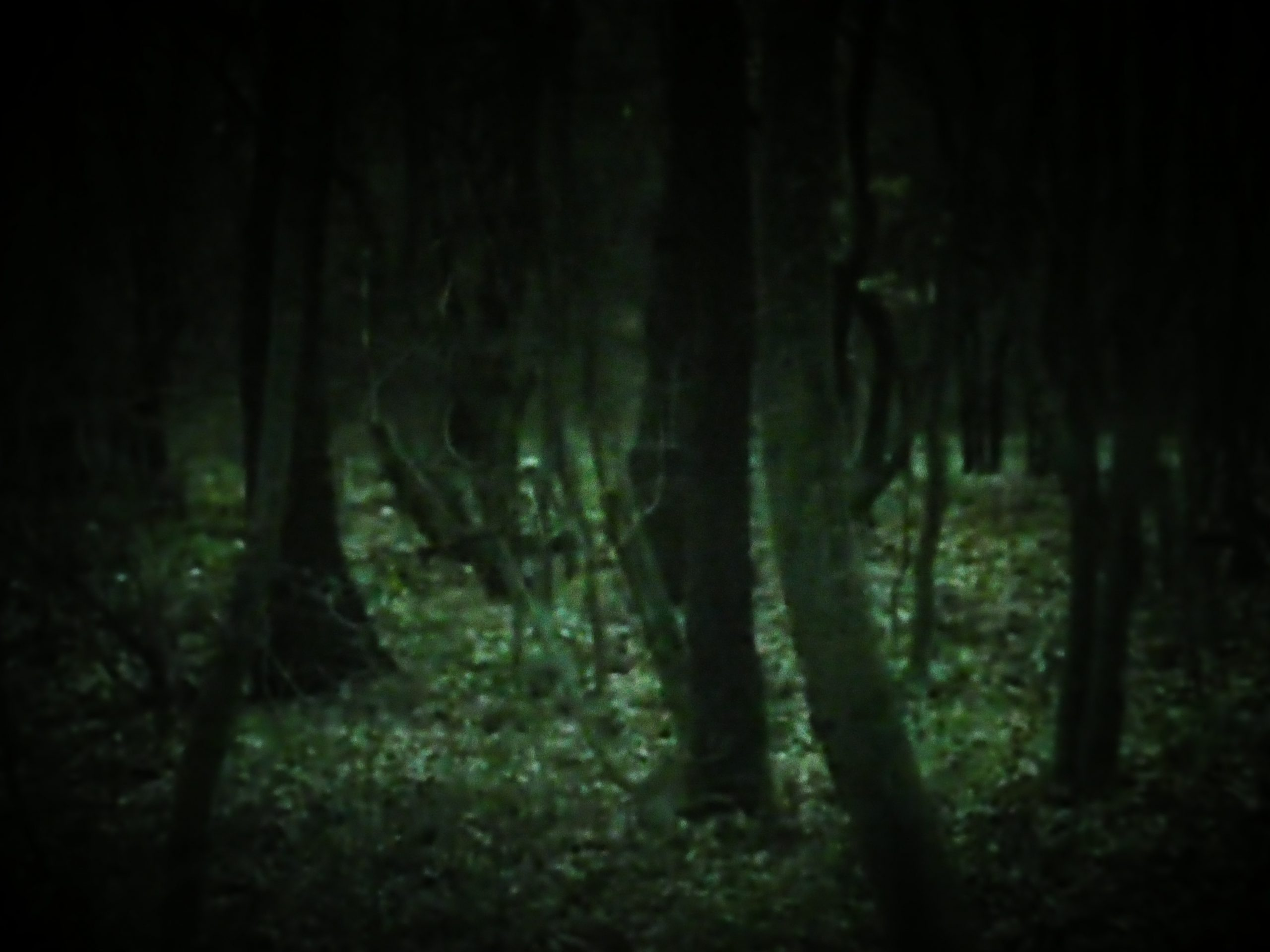 They Live in the Woods