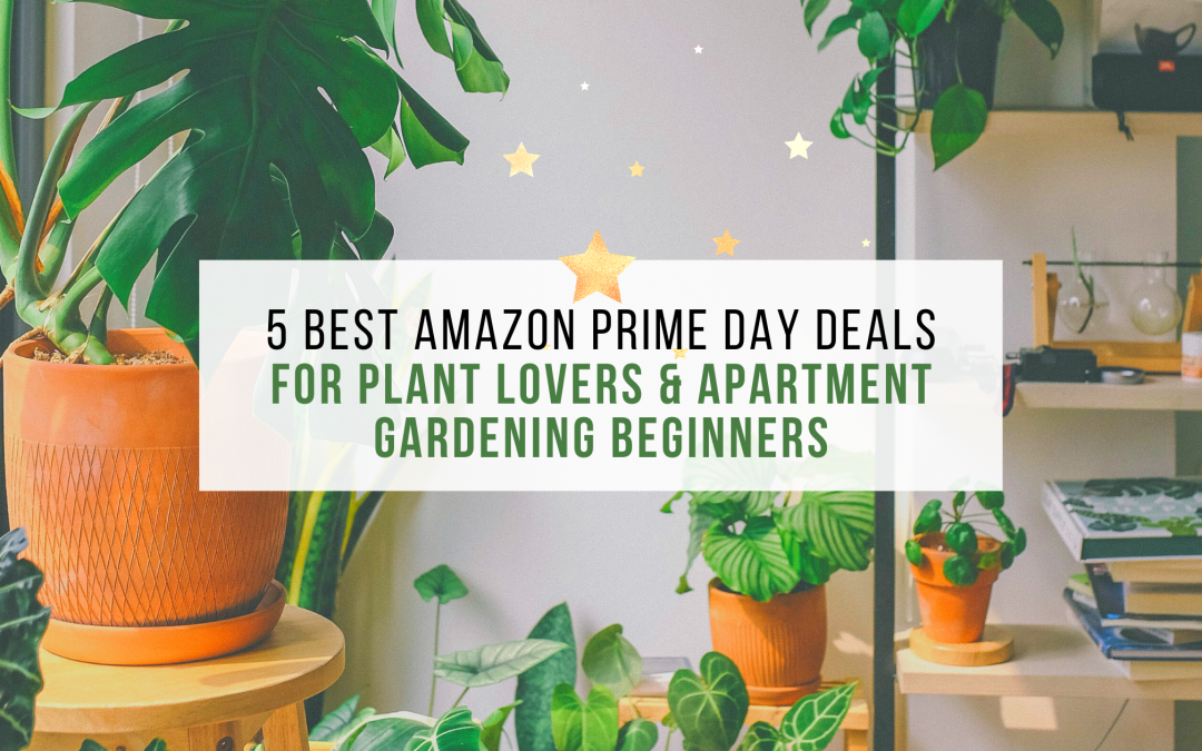 5 Best Amazon Prime Day Deals For Plant Lovers & Apartment Gardening Beginners
