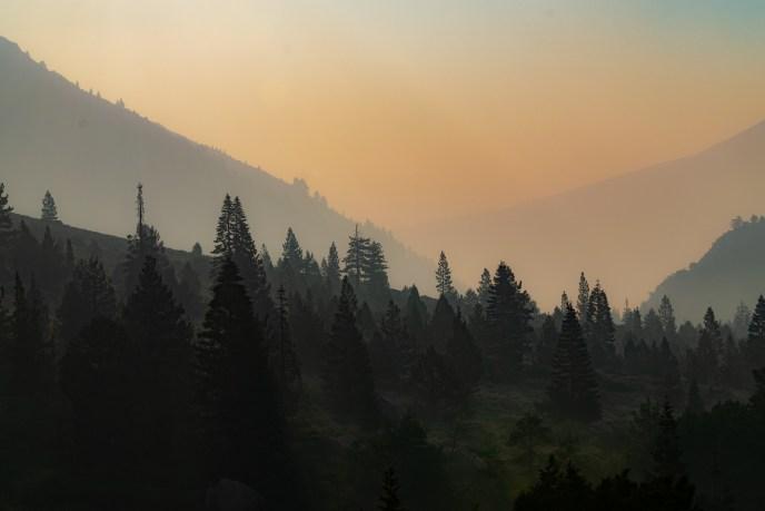 Hazy Treelines