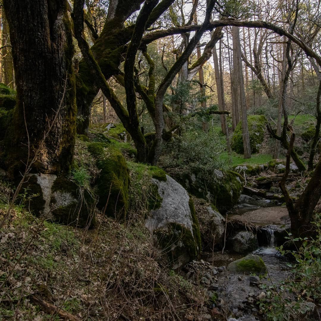 Stumbled into Rivendell last week (as well some poison oak and more than a few thickets)!
