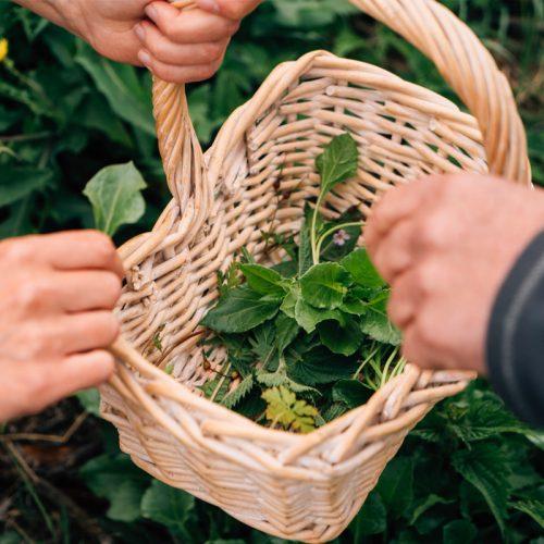 foraging-produce-in-basket-1.jpg