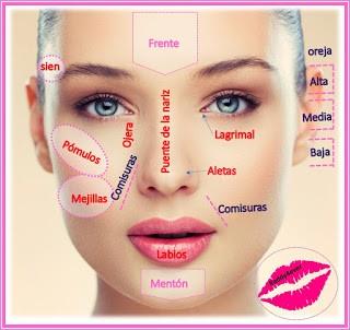 partes del rostro para maquillaje