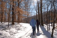 walking with somatics