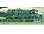 TSST002 - Small hedge