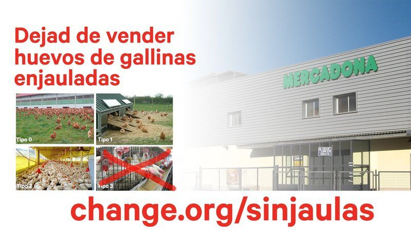 No compres huevos de gallinas infelices