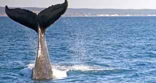 whale season in cabo san lucas