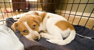 Totes Newsworthy Spotlights the American Kennel Club Canine Health Foundation