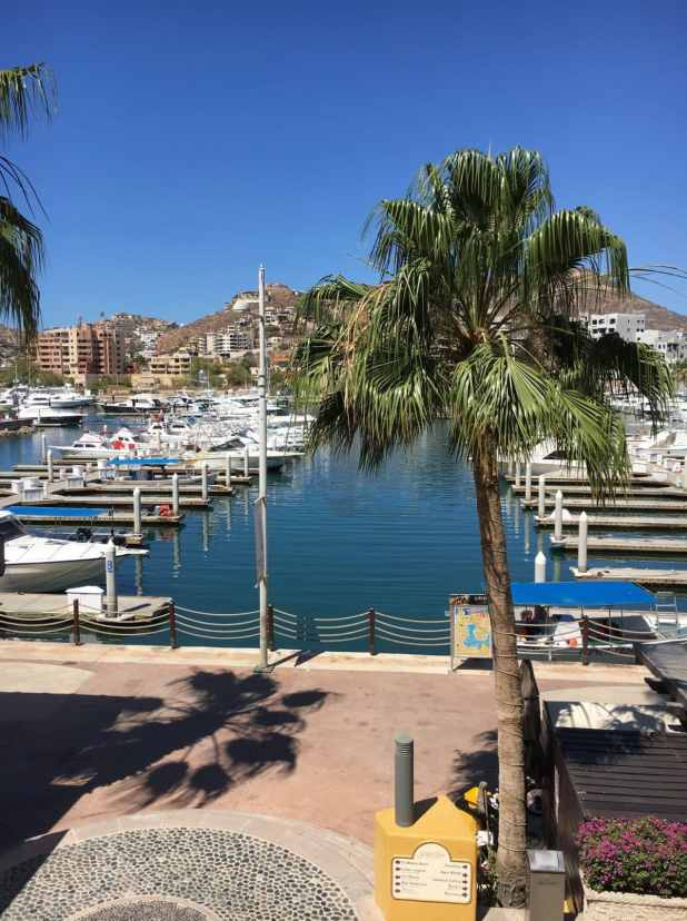 Information on Fall Fishing Season in Cabo San Lucas (3)