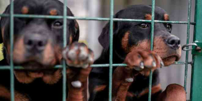 Twosmall puppies closed in net.