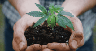 Everything You Need to Know about Hemp