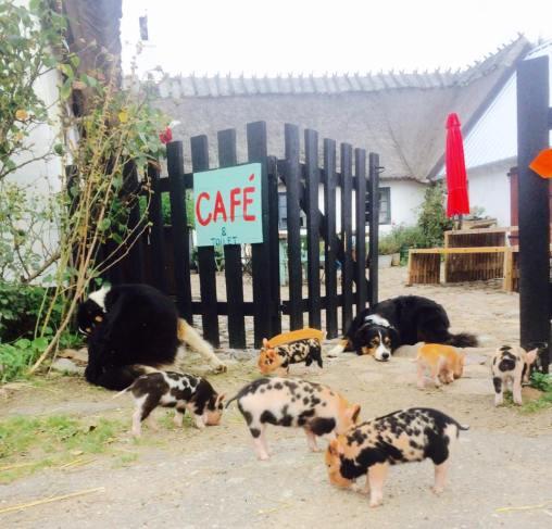 hunde og smågrise