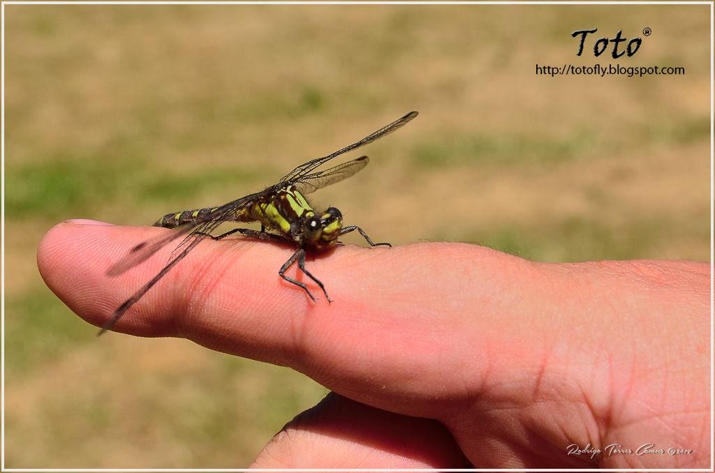 Insectos, arácnidos y otros