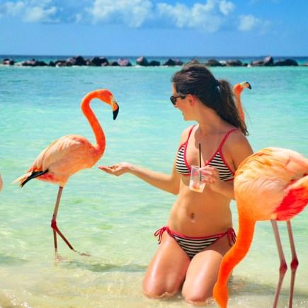 Ellen feeding flamingos at Flamingo Beach of Aruba's private island, Renaissance Island for Ellen Blazer's travel blog To Travel and Bloom