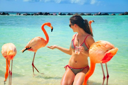 Ellen feeding flamingos at Flamingo Beach of Aruba's private island, Renaissance Island for Ellen Blazer's travel blog To Travel and Bloom
