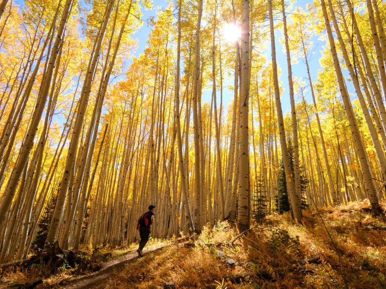 Hike to Beaver Pond scaled - 3 Best Places for Fall Colors in Crested Butte, Colorado