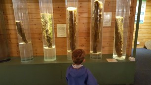 2500 year old staves