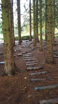 Woodland adventures at Drum