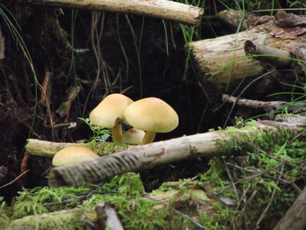 Wild mushrooms!