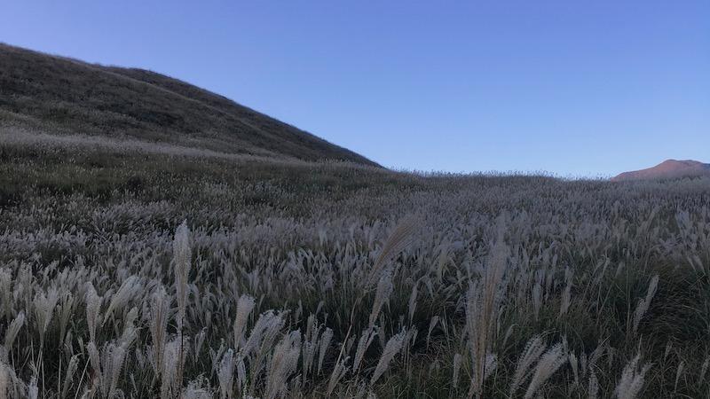 稲取の細野高原でやっている秋のすすきイベントに行ってきた