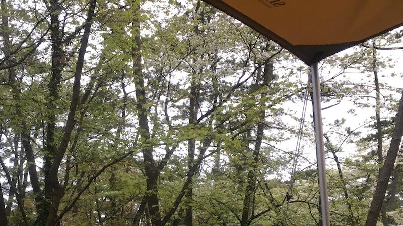 タープ越しに見るヤマザクラ