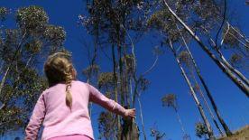 Treetops reaching to heaven