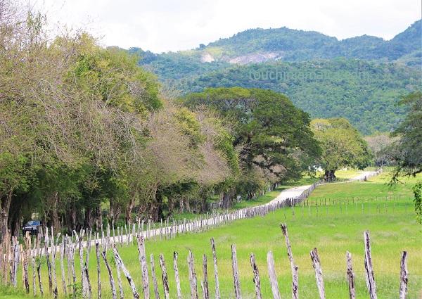 Landschaft bei den YS Falls