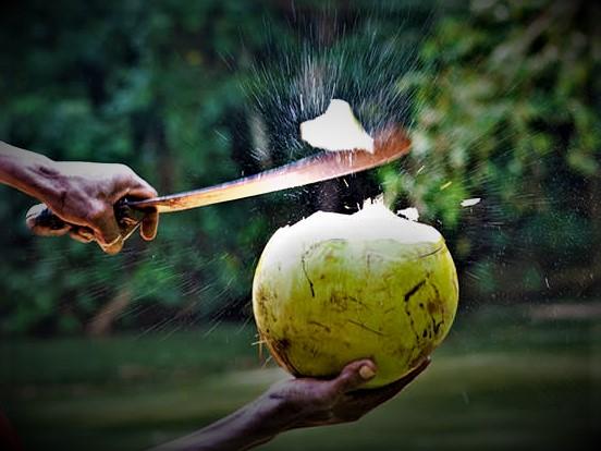 Bei schlimmer Hitze auf Jamaika trinken die Jamaikaner das Wasser grüner Kokosnüsse, um den Mineralhaushalt wieder aufzufüllen.