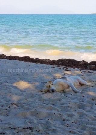 Schlafender Hund am Fort Clarence Beach