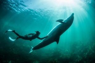Výnimočný okamih s divokým delfínom skákavým