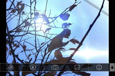 app_photo_lensflare_10.jpg